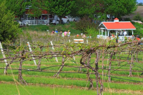 a step by step guide on how to build a grape trellis